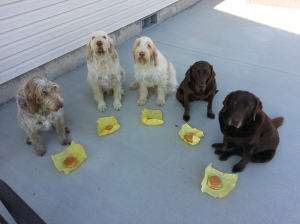 Mia, Elvis, Doc, Dakota and Sophie wait to eat their cheese burgers, in celebration of Doc's 2nd birthday.