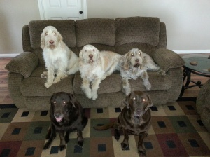 Doc, Elvis and Mia on couch, Sophie and Dakota on floor