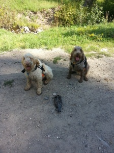 Doc and Mia pose with ruffed grouse