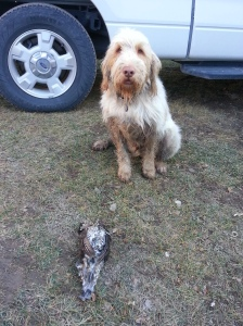 Doc with his Ruffed grouse