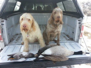 Doc and Mia pose with their retrieves, a Gadwall and a Canadian Goose.