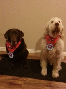 Sophie and Elvis with their Intermountain Therapy Animals (ITA) scarves and American Kennel Club (AKC) therapy patches.