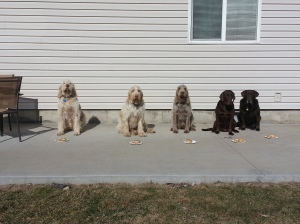 Elvis, Doc, Mia, Dakota, and Sophie wait to eat their roast beef sandwiches and tater tots.