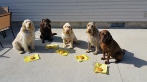 Elvis, Sophie, Doc, Mia and Dakota pose with their cheeseburgers in celebration of Mia's 6th birthday.
