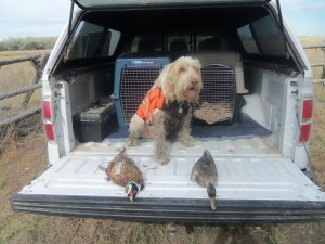 Tired and dirty, Doc poses with the Pheasant and duck opening day of Pheasant season.