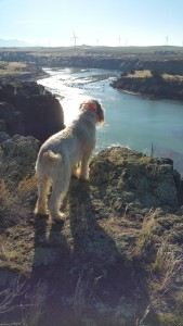 Doc on the cliff's edge overlooking the river