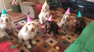 Elettra, Doc, Elvis, Sophie, Mia and Dakota tolerate party hats and a picture before digging into their hamburgers