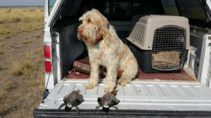 Doc with the two ducks he retrieved.