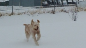 Elvis romps in the snow before therapy visits