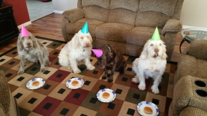 Mia, Doc, Dakota, Elvis celebrating Dakota's 12th birthday and Elvis' 8th birthday